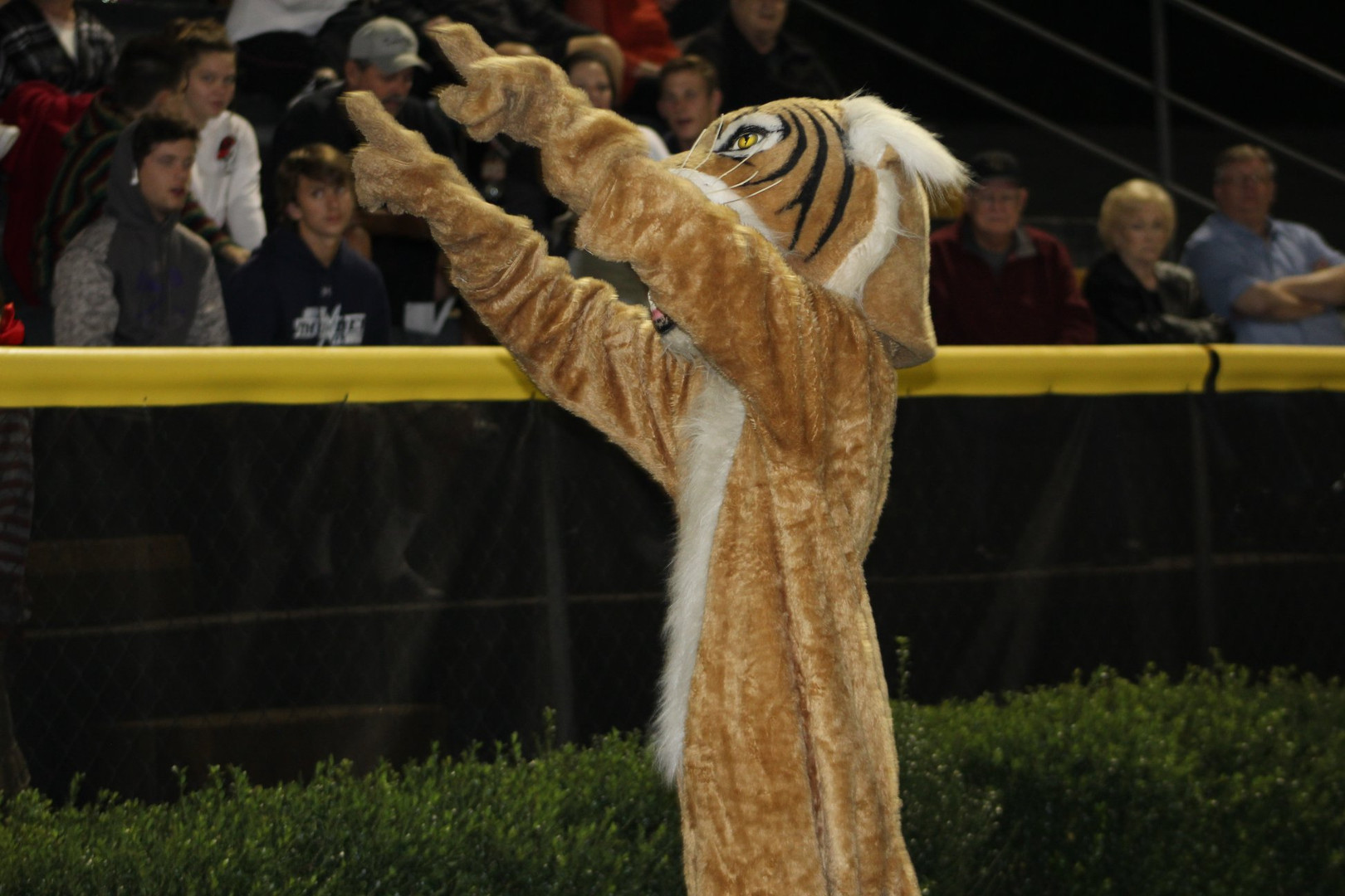 FRA Wildcat Mascot