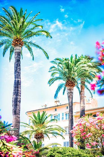 Palmen der Provence
