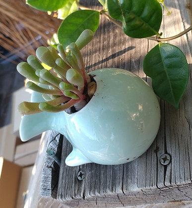 Blue Whale Ceramic Pot