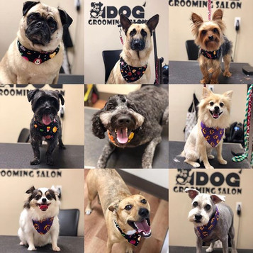 A few Spa pups from Tuesday & Wednesday!