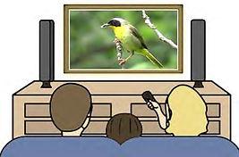 tv birds 1.jpg