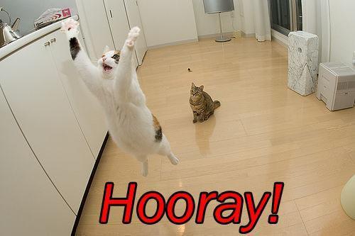 cat-saying-hooray_zpsebb78809.jpg~original.jpg