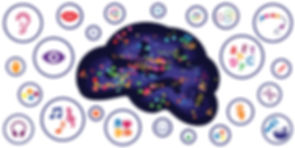 muti-sensory brain jpeg.jpg