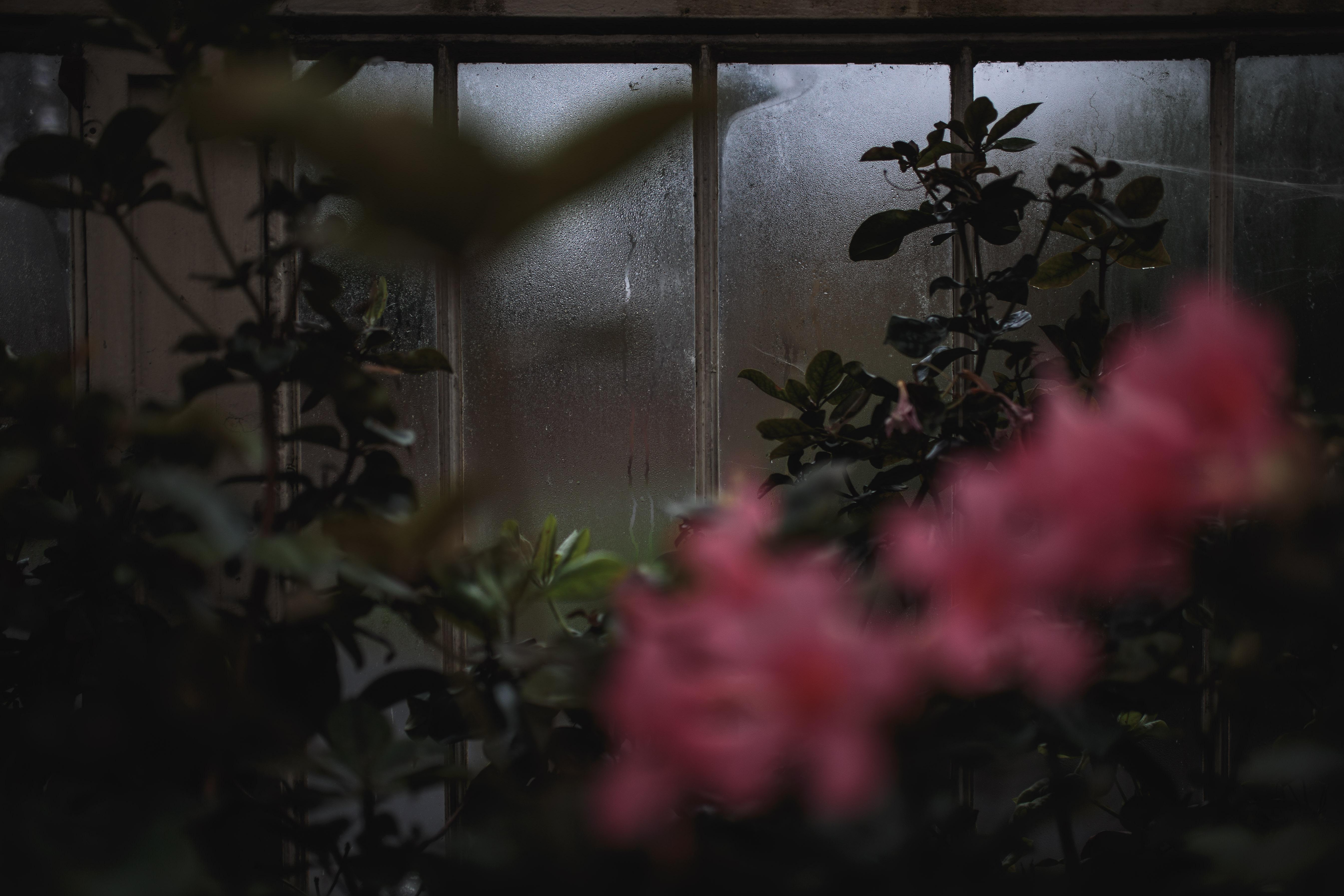 Botanic Gardens, Wicklow
