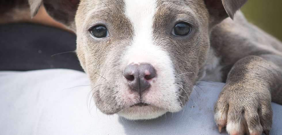 Curious Puppy