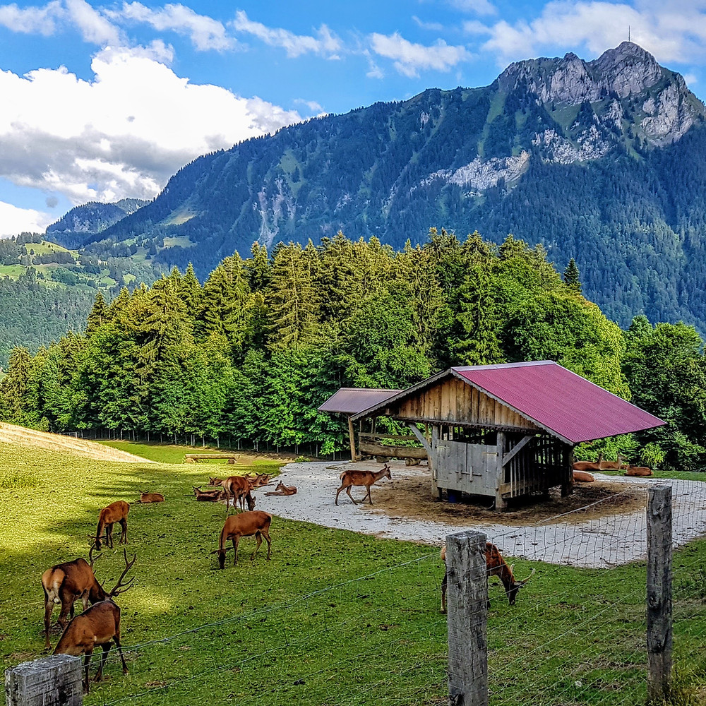 FREE campsites in Switzerland