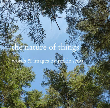 the nature of things dustjacket.jpg