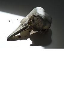 bonehead image.jpg