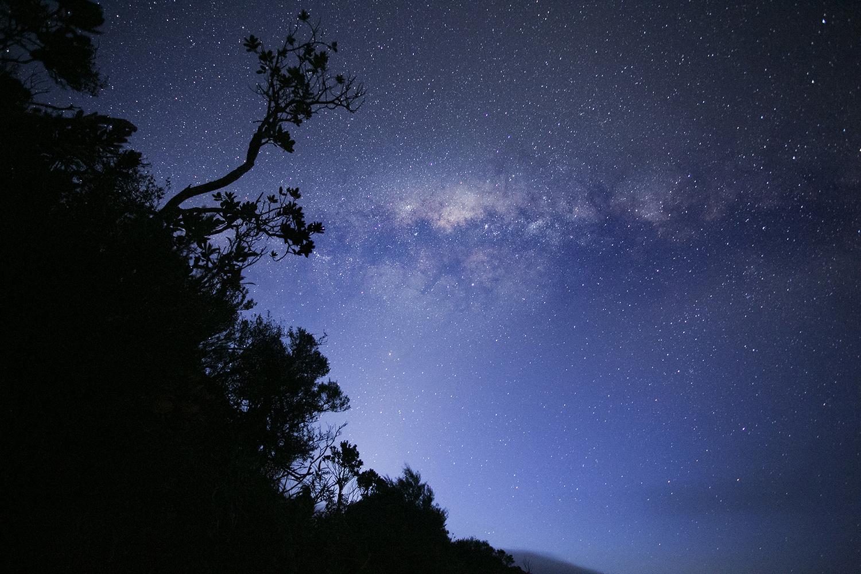 jC_WindyCanyonStarTrees