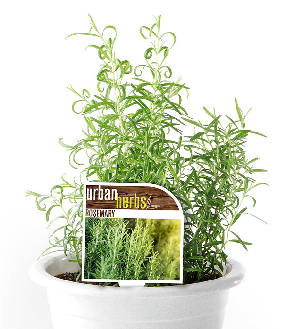 Rosemary Urban Herbs Label cropped.jpg