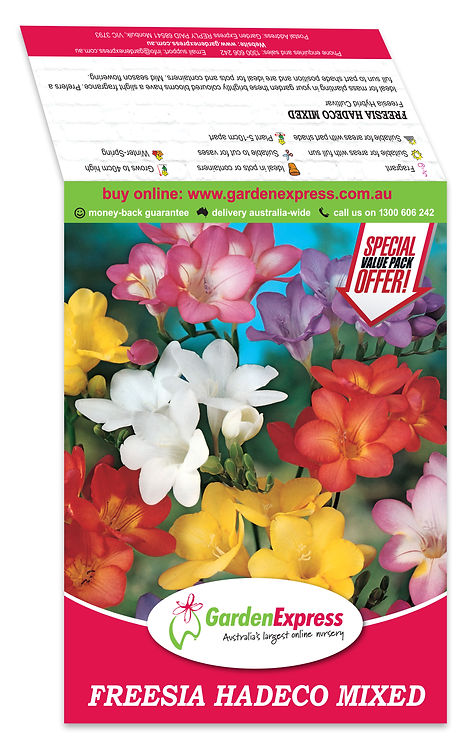 Garden Express Saddle Freesia.jpg