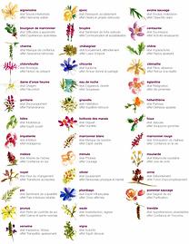 Fleurs de Bache - la gamme et les émotions