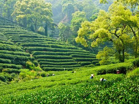 5 Things Metolius Tea Will Never Do
