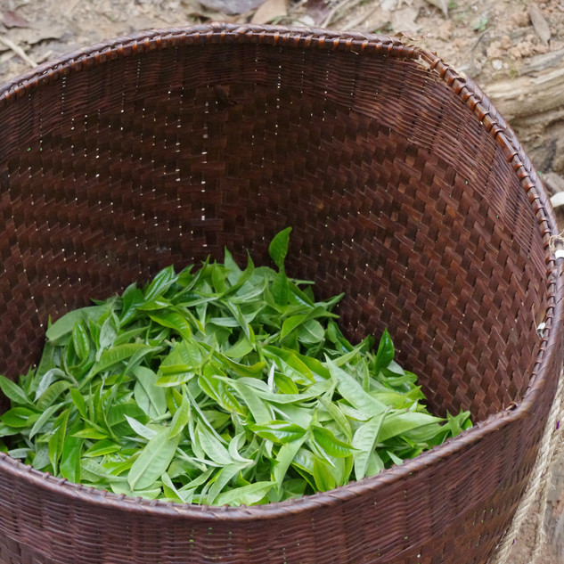 yunnan china tea 9.JPG