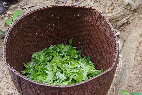 basket of tea leaves.JPG