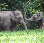 Copy of Elephant refuge gift photo-lowre