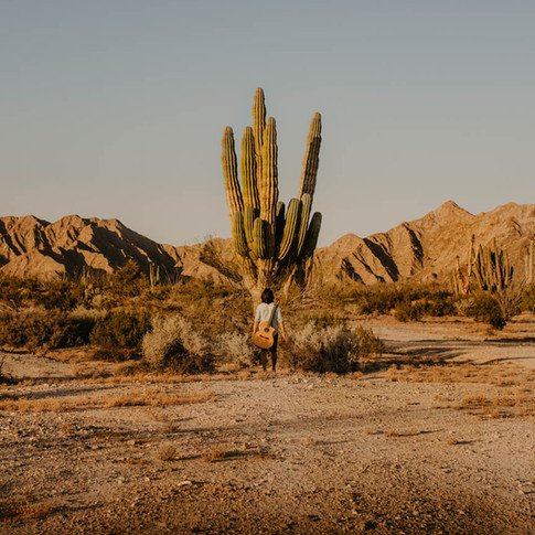 Giant Cactus, Baja Mexico
