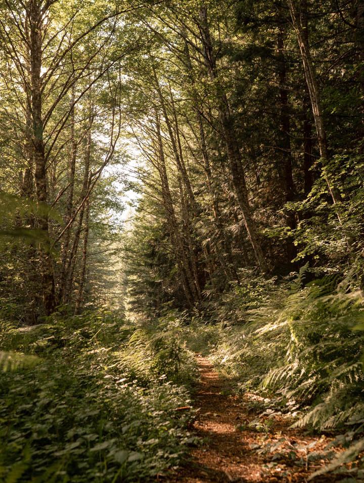 Storybook Trail, North Cascades