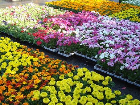 Annual Spring Flower Fundraiser