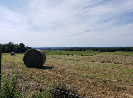Hay Time