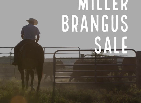 Fall Bull & Female Sale Schedule
