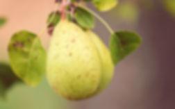 La taille des fruitiers est nécessaire pour garantir une bonne santé de l'arbre et assurer une récolte généreuse.
