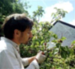 La taille des arbustes en Ille-et-Vilaine 35