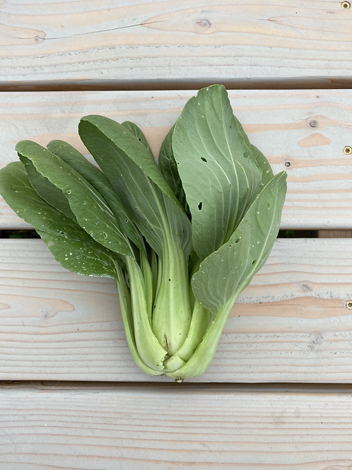 Pac Choi (med/large)