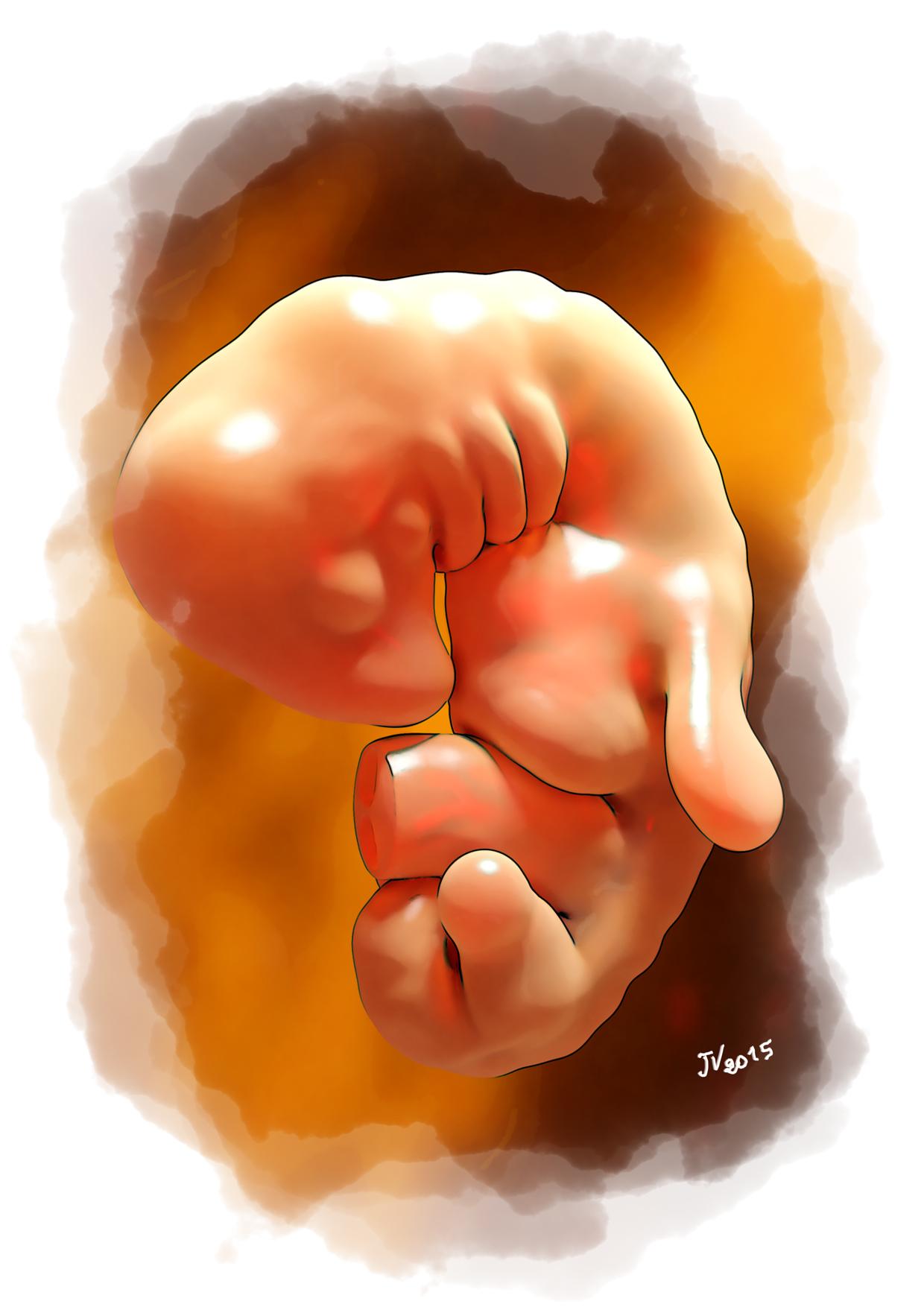 Embryon
