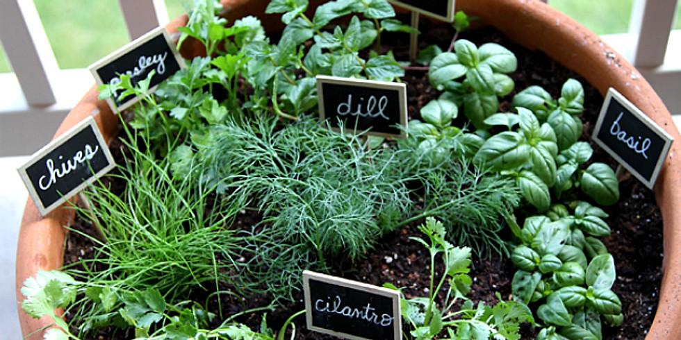 Herb garden, Wicking bed
