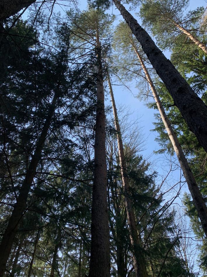 Kirchberg: Blick zu den Baumkronen