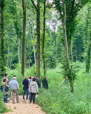 Waldführung Harmannsdorf