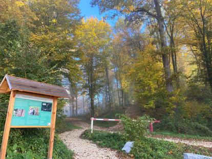 Harmannsdorf Rohrwald vom Parkplatz in den Wald