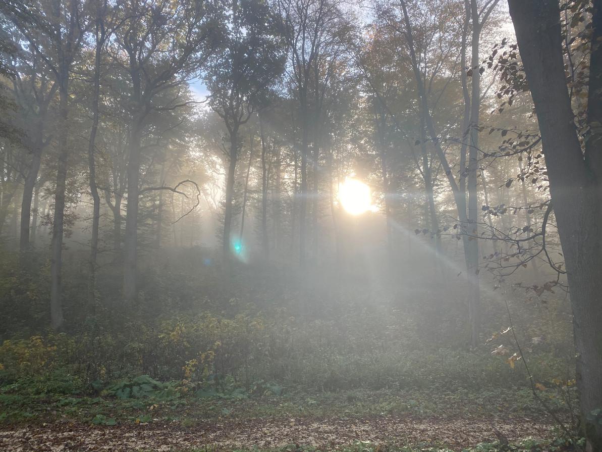 Sonne und Nebel Harmannsdorf