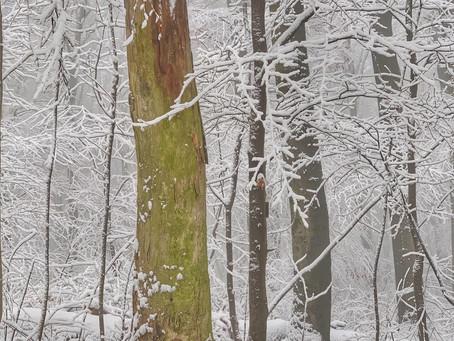 Warum absterbende Bäume gute Bäume sind