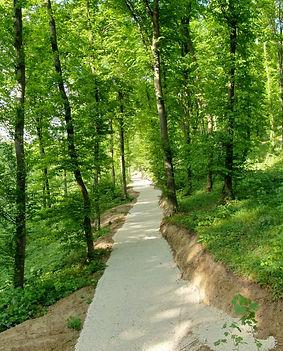 Weg im Klosterwald