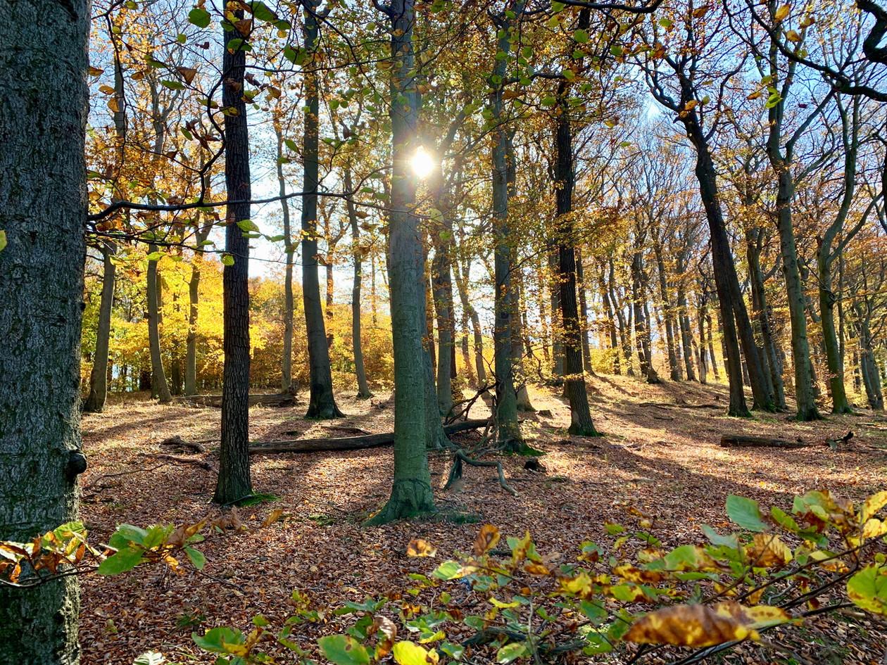 Herbst im Kahlenberg