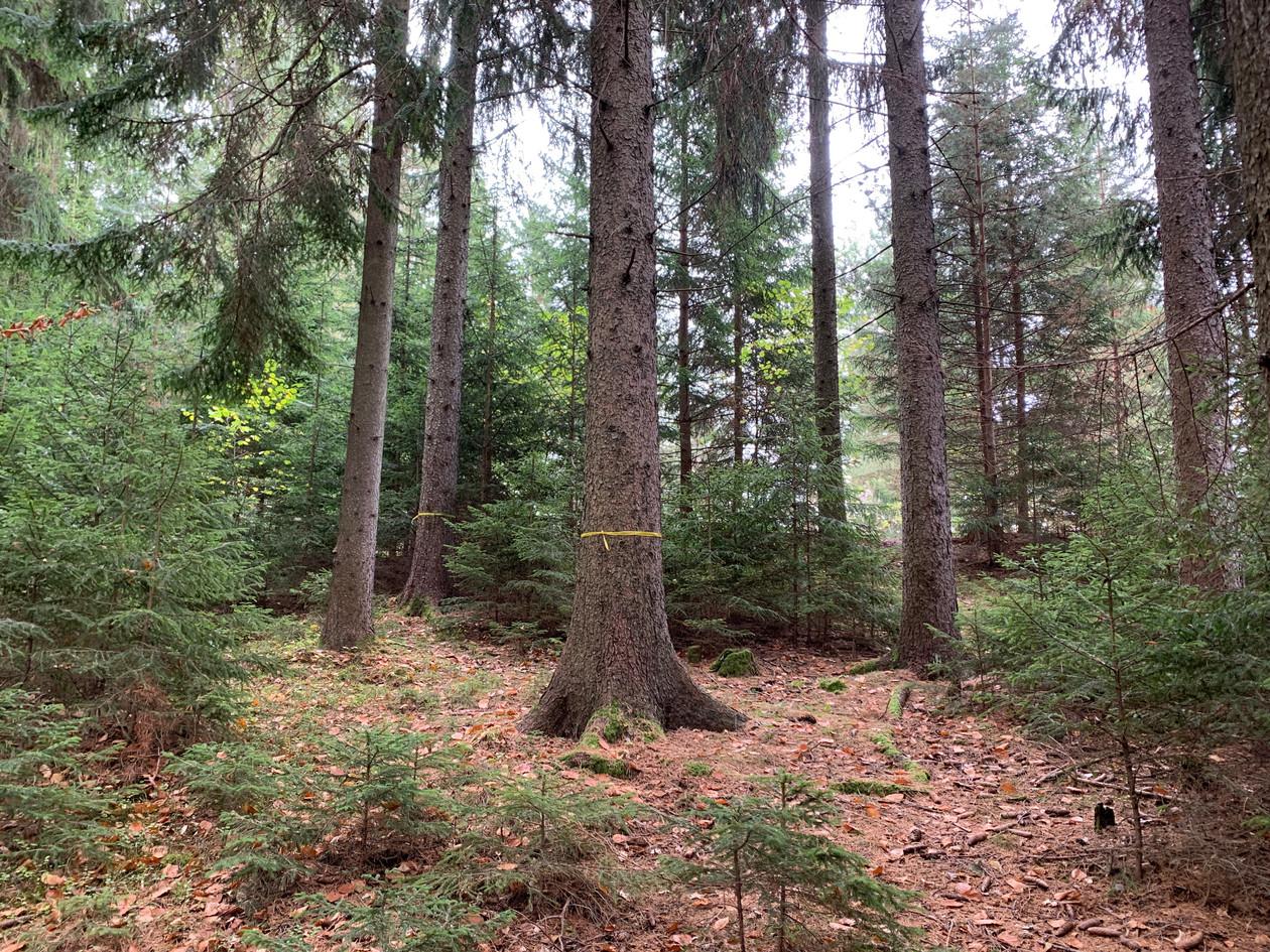 Herbst Kirchberg am Wechsel