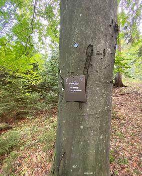 Bestattungsbaum Klosterwald