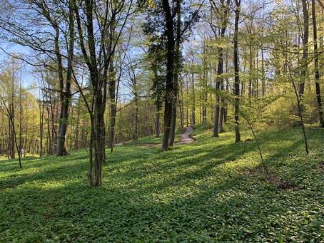 Keine Sturmschäden in den Klosterwäldern
