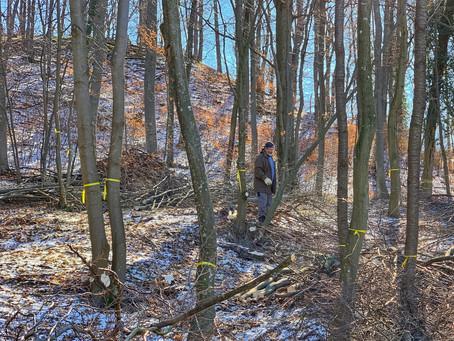Klosterwald Heiligenkreuz wird erweitert