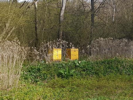 Neue Bienenstöcke im Klosterwald Harmannsdorf Rohrwald