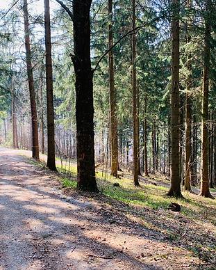 Kirchberg Weg
