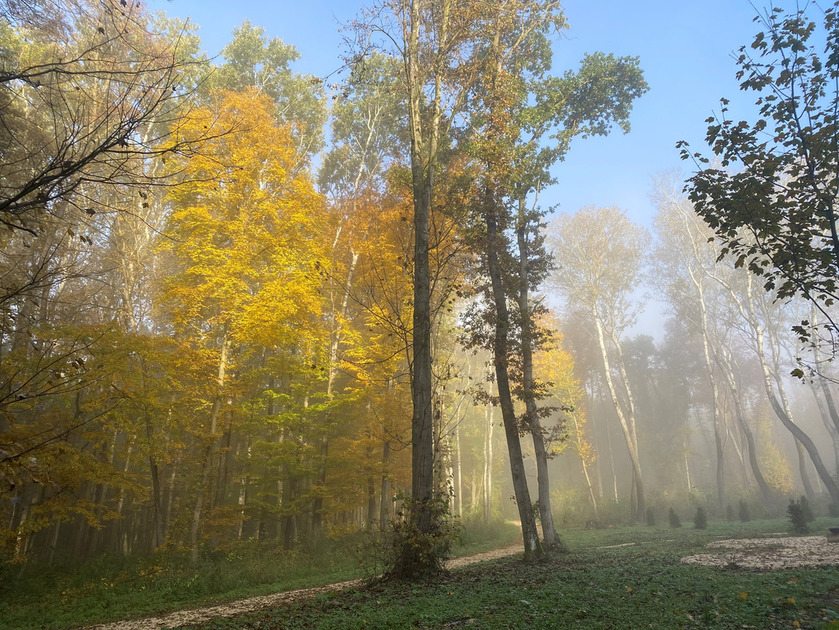 HArmannsdorf Rohrwald Herbst