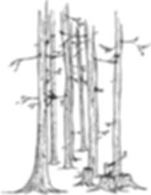 L'esprit Wood | Vos skis de qualité, uniques et performants | Suisse