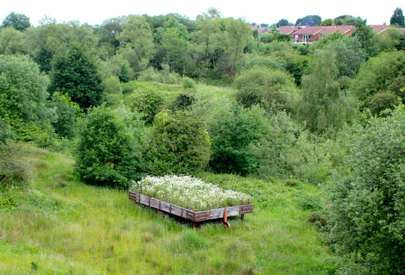 Emergency Meadow