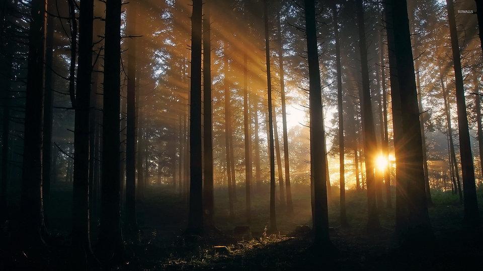 dark-trees-hiding-from-the-sun-light-483