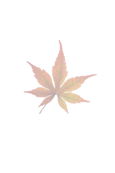 brown-leaf-2559932_edited_edited.jpg