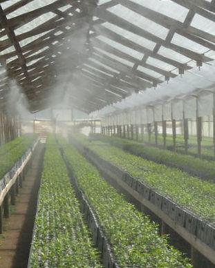 Riego automatizado del vivero de cítricos, demostrando la calidad empleada en el vivero