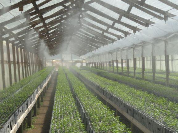 riego automático para plantas de alta calidad
